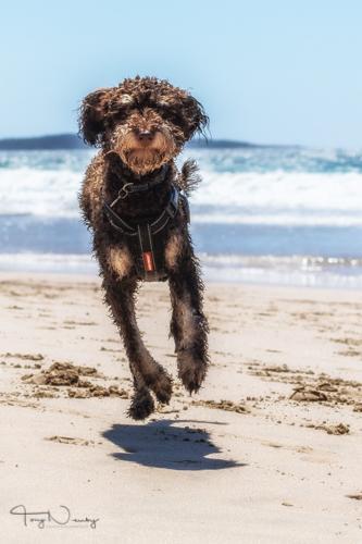 Alfie running on the beach