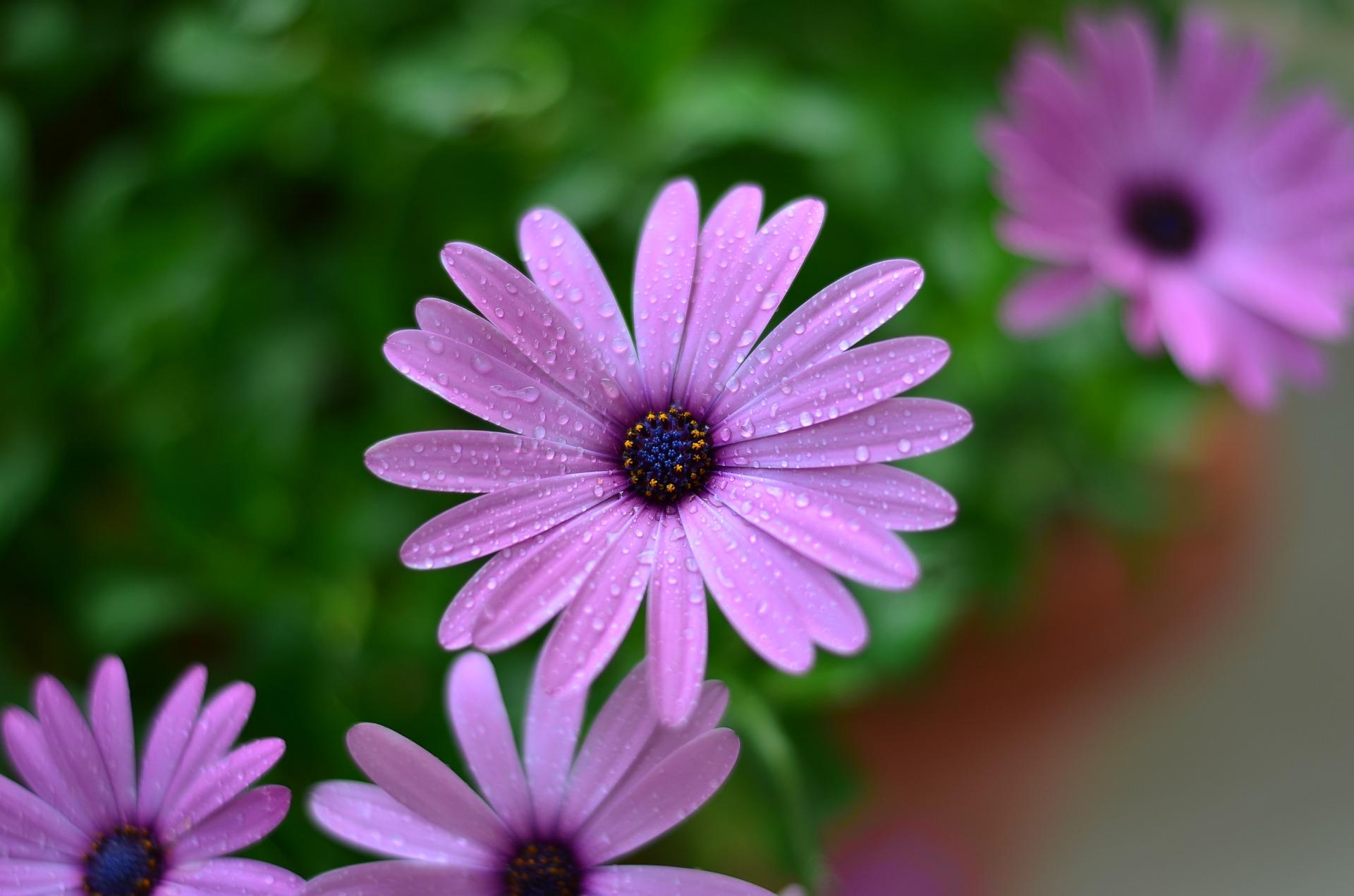 flower-2421257_1920.jpg