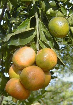 citrus_14.jpg