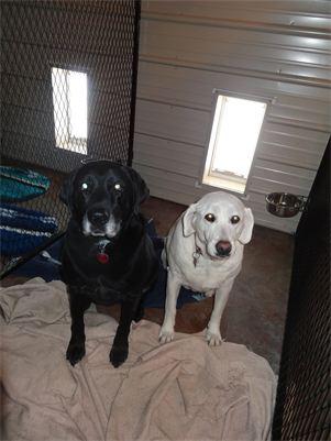 Onyx & Gracie