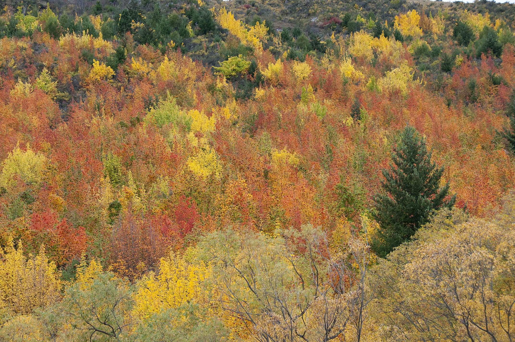 autumn_leaves_20110416_Arrowtown_NZ_1.jpg