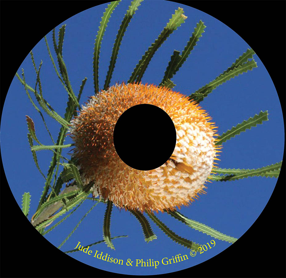 Banksia_disc.jpg