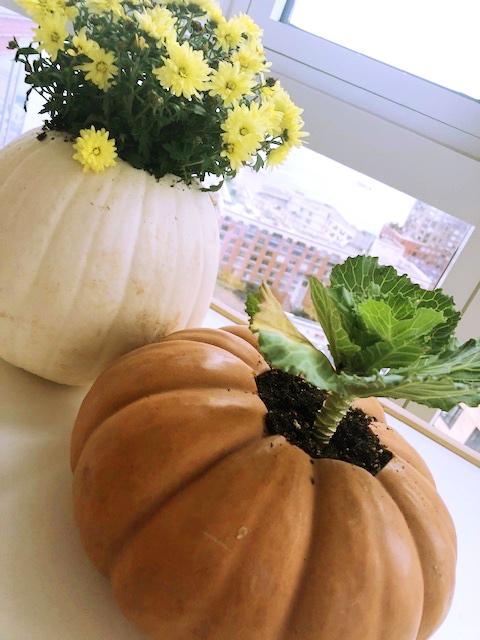 thanksgiving Pumpkin 19.jpg