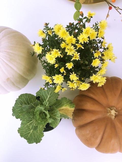 thanksgiving Pumpkin.jpg