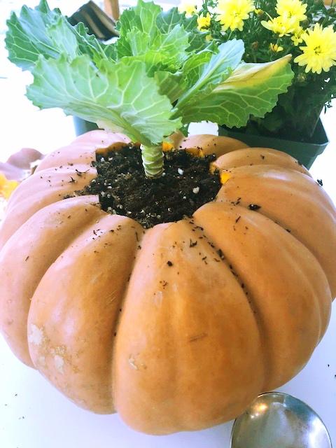 thanksgiving Pumpkin 9.jpg