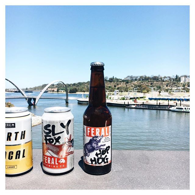 @feralbrewing's new Local lager is in, alongside some old friends; #HopHog & #SlyFox!