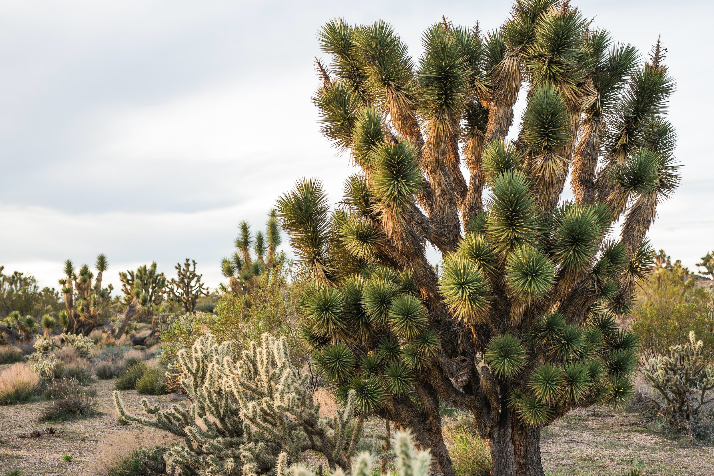 Joshua tree cactus scenic detail desert landscape Kyle Loves Tori Photography