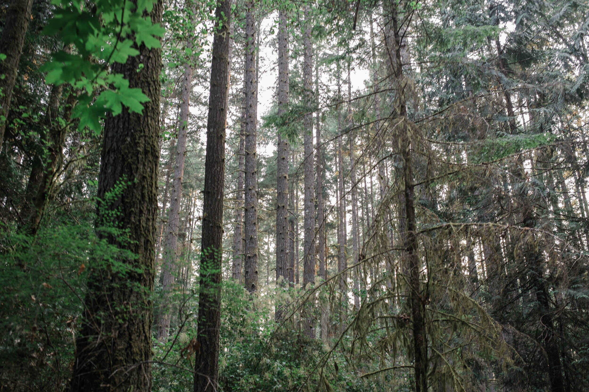 Grand Forest West Bainbridge Island