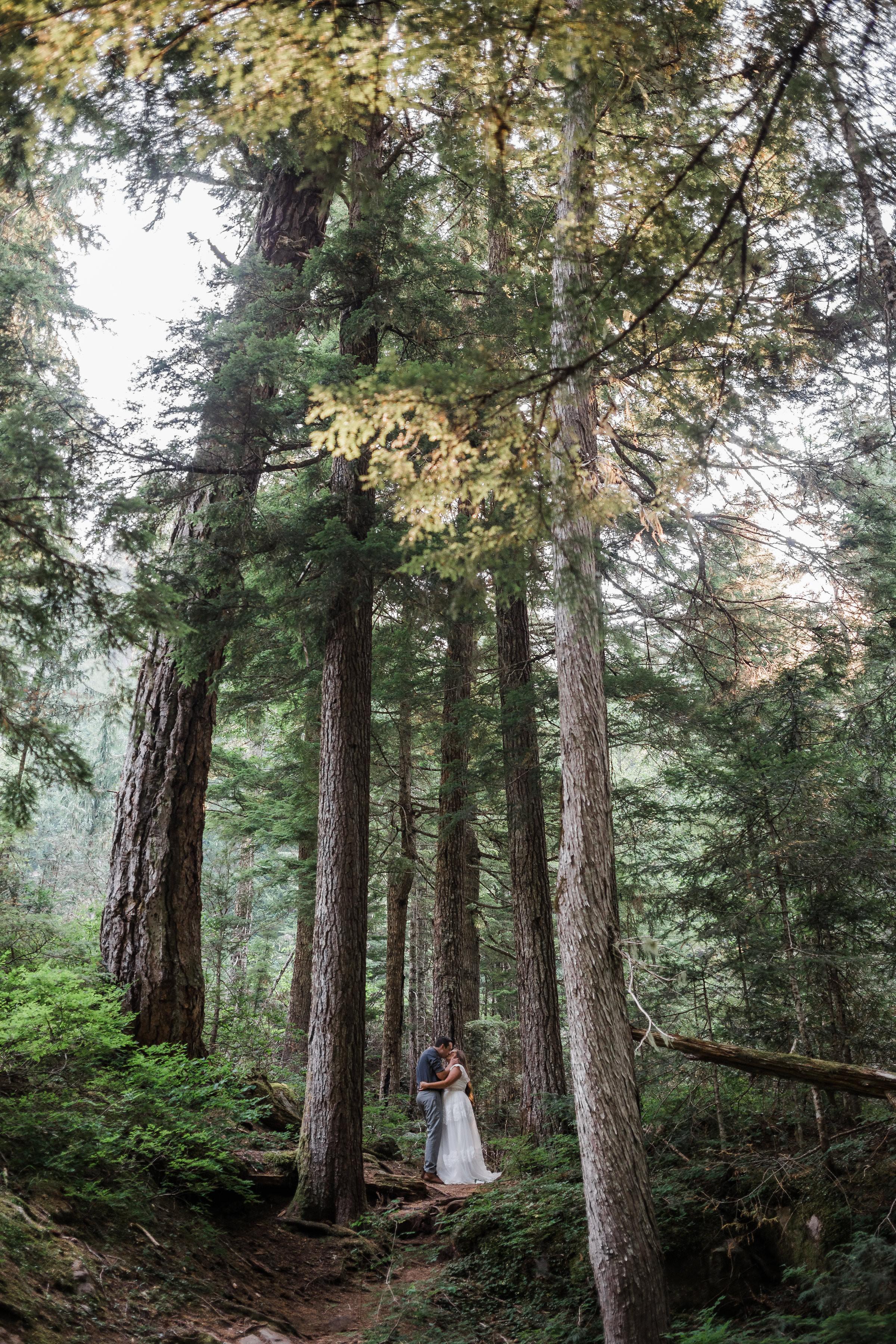 Mount Rainier National Park Forest Adventure Elopement