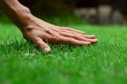 winter-rye-grass-care-101.jpeg