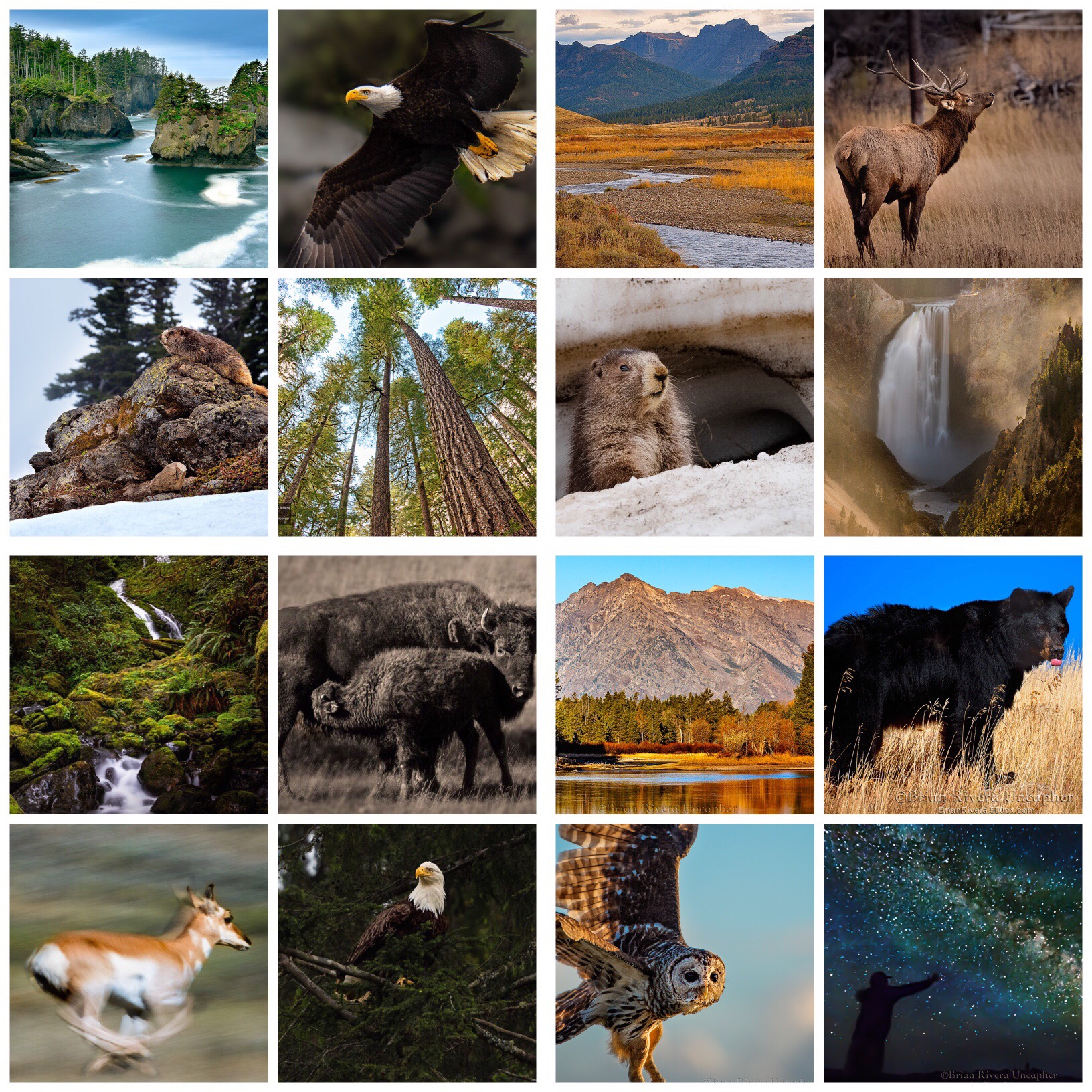 Top Row:   Olympic National Park, Yellowstone National Park, Rocky Mountain National Park;   Second Row:   Olympic National Park, Washington State Orcas' Island Park, Yellowstone National Park;   Third Row:    Olympic National Park, Yellowstone National Park, Grand Tetons National Park;   Bottom Row:   Grand Tetons National Park; Olympic National Park; Everglades National Park, Acadia National Park.  © Brian Rivera Uncapher