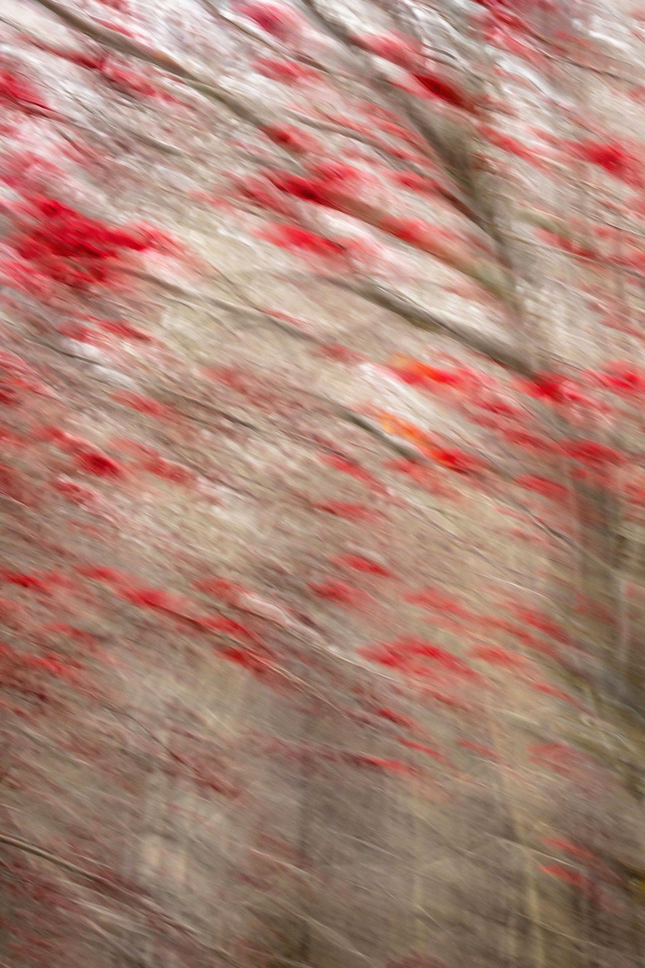 Berry Clusters - Homer, Alaska ©2018 Brian Rivera Uncapher