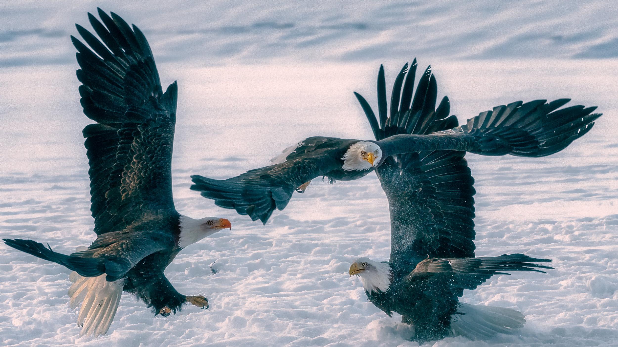 K. EaglePortfolio_Image_11_©BrianRiveraUncapher.jpg
