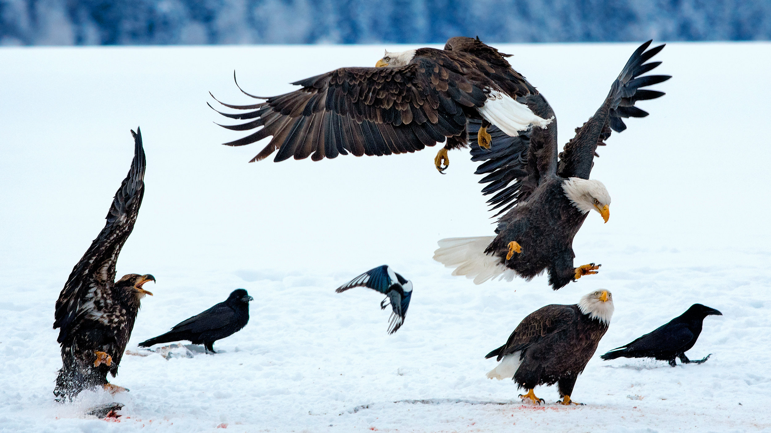 B. EaglePortfolio_Image_2_©BrianRiveraUncapher.jpg