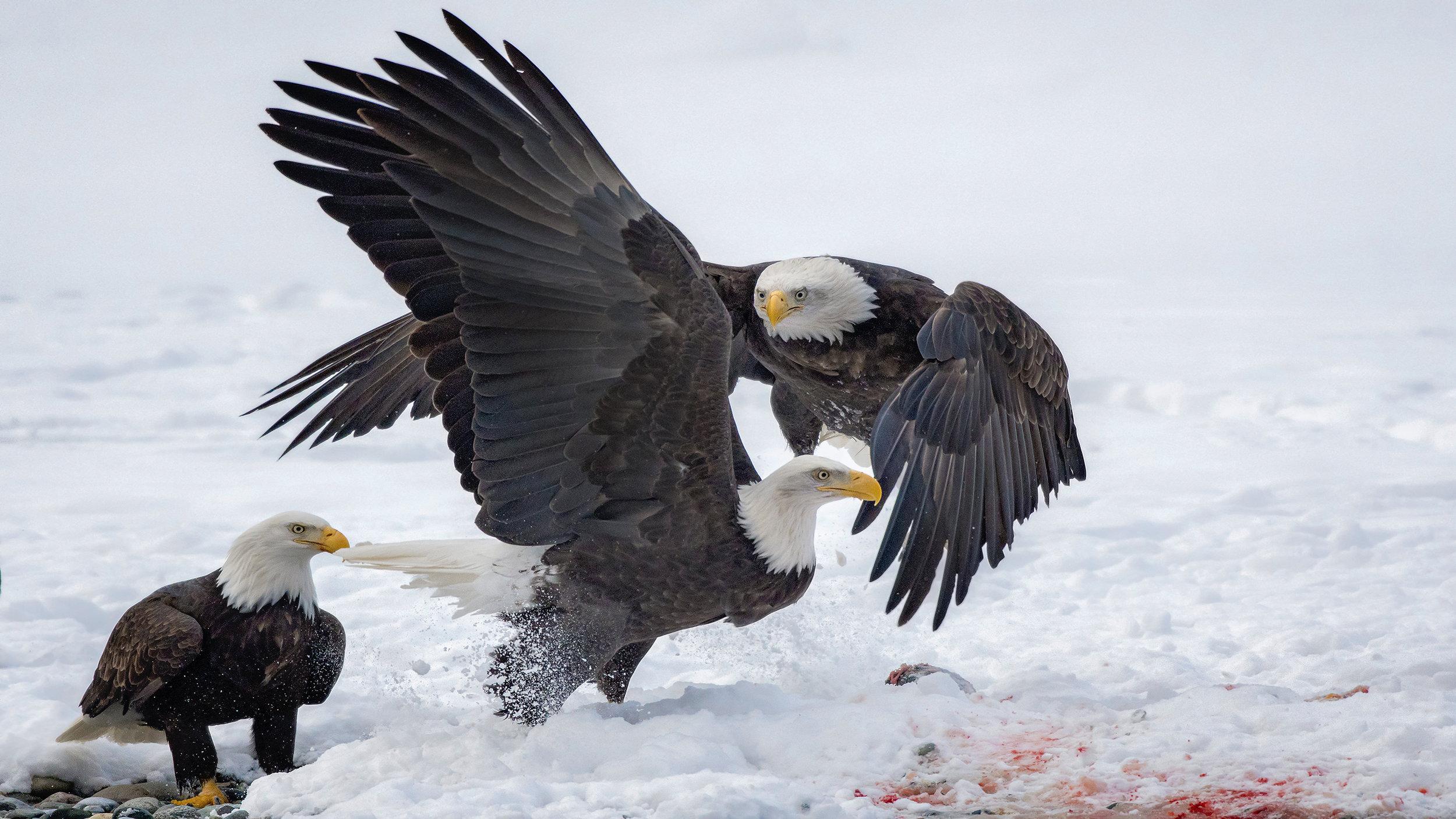 Q. EaglePortfolio_Image_20_©BrianRiveraUncapher.jpg