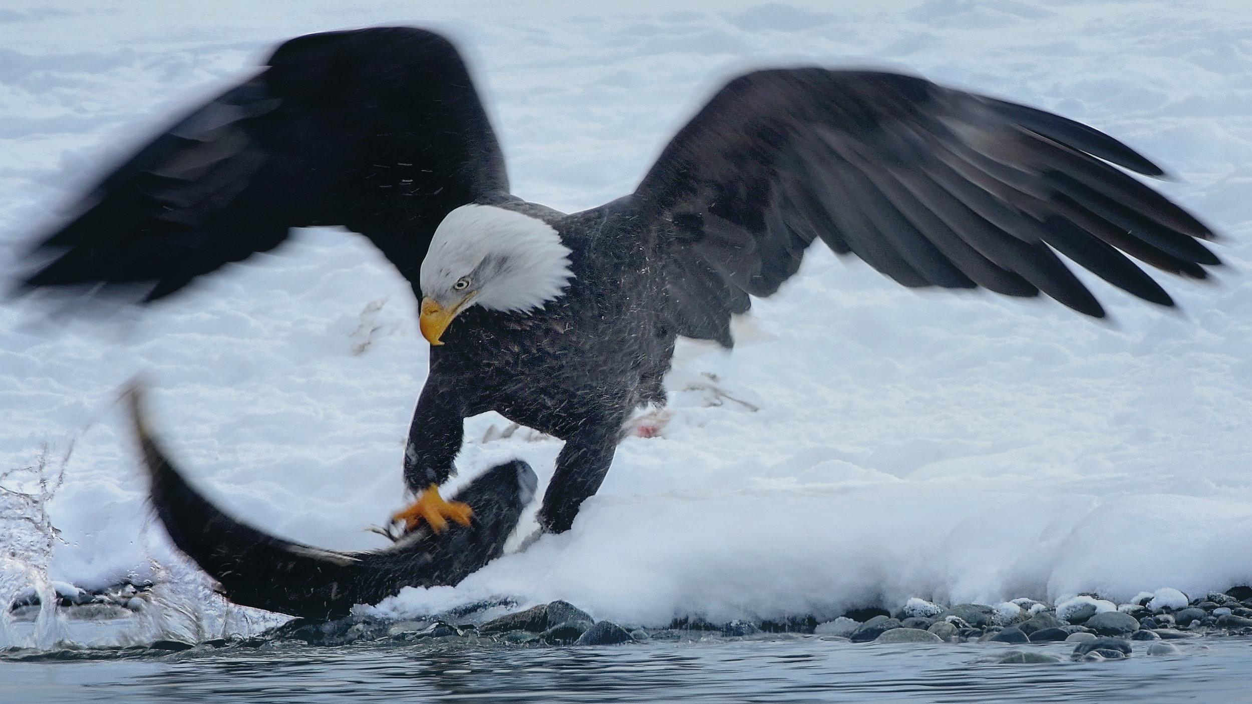J. EaglePortfolio_Image_9_©BrianRiveraUncapher.jpg
