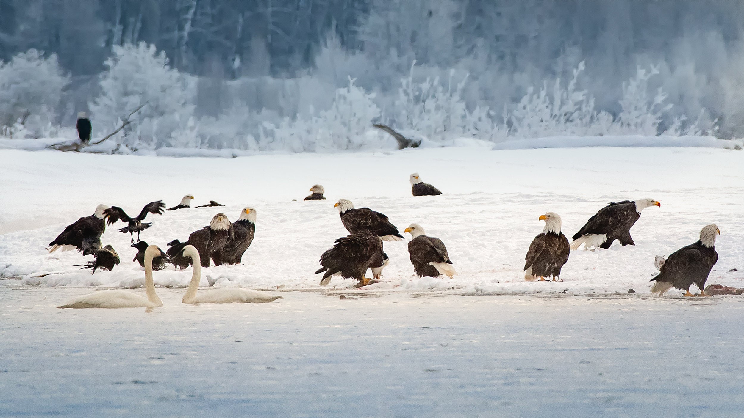 P. EaglePortfolio_Image_14_©BrianRiveraUncapher.jpg