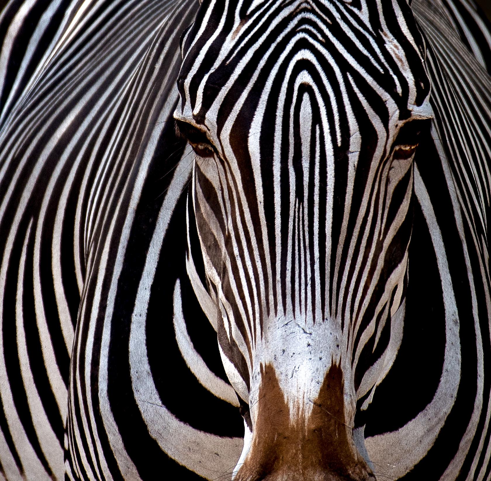 Zebra©BrianRiveraUncapher.jpg