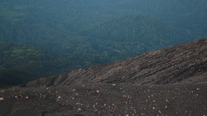 Asoka---Kerinci-2.jpg