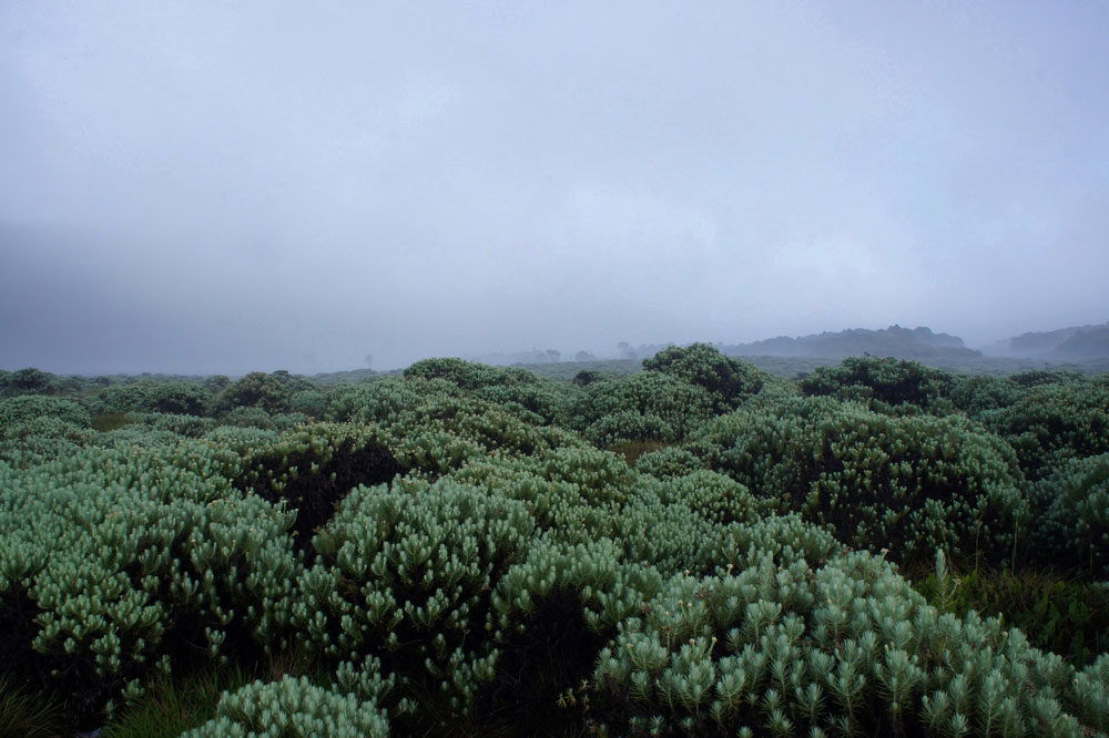 Asoka-Remadja---Papandayan-17.jpg