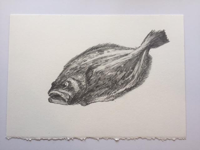 "Fluke, pencil on paper, 7"" x 10"""