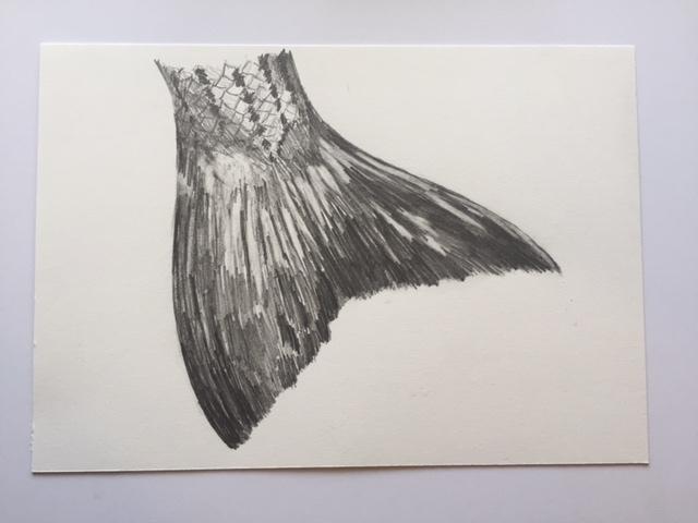 """Striper (Broom Tail), pencil on paper, 7"""" x 10"""""""