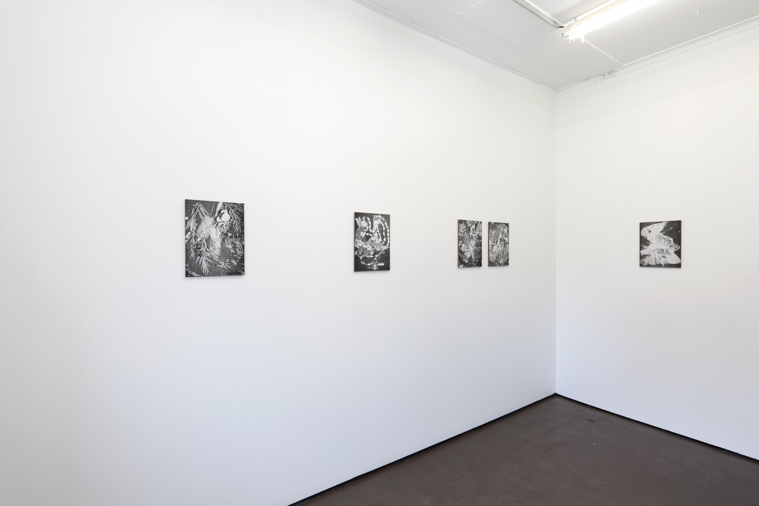 Exhibition View, The Sick Rose, David, Melbourne, 2019