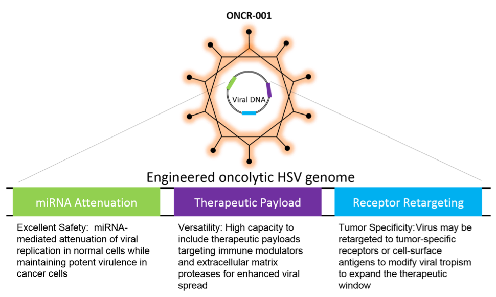Oncorus oHSV miTNA attenuation therapeutic payload and receptor retargeting