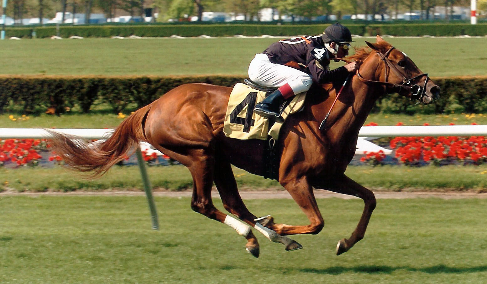 Ambidaxtrous, winning the 7th race at Belmont Park on April 30, 2008.