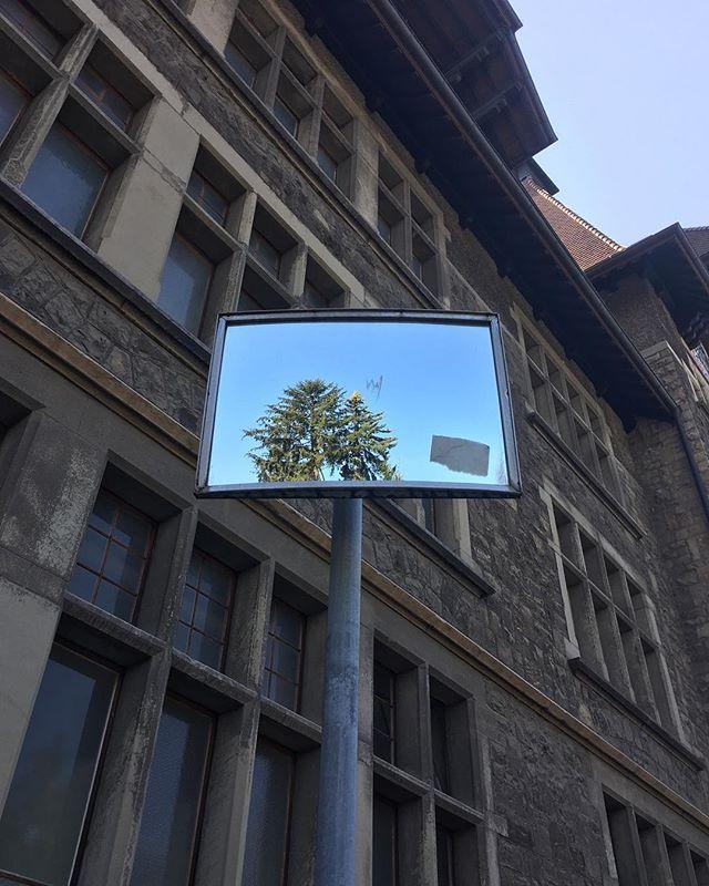 mirror tree (2018) #tbt