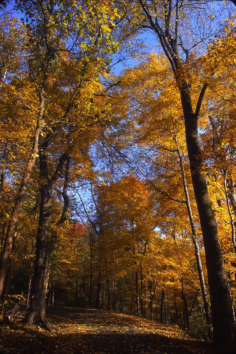 Autumn in Percy Warner Park