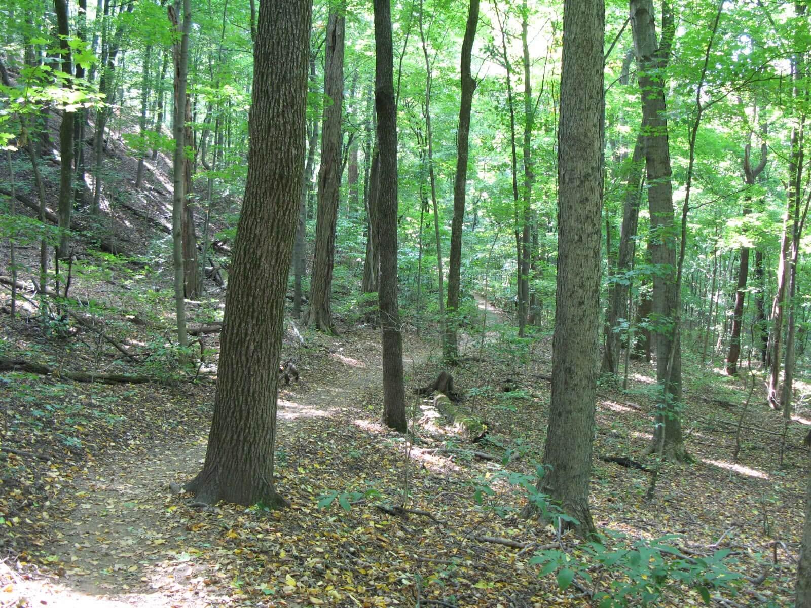 Mossy Ridge Trail (Percy Warner Park)