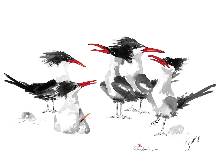 The Royals - royal terns