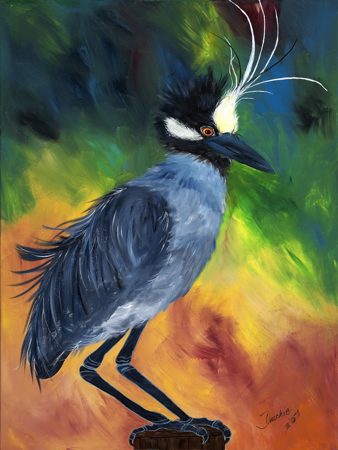 Chickee Baby I'un - yellow-crowned night heron