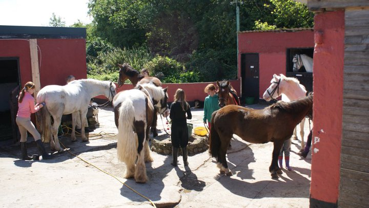 2 x Riding Lessons Voucher