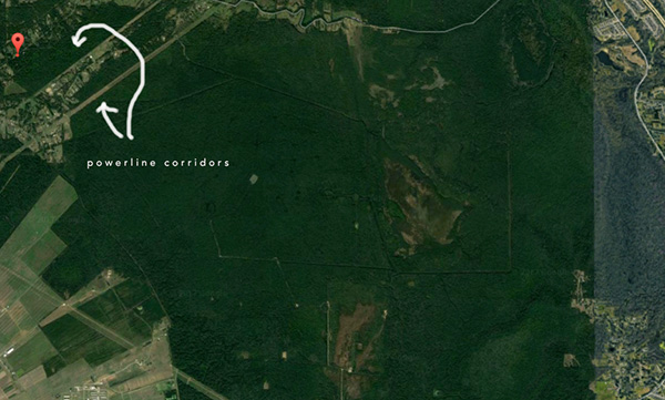 A satellite image of the area showing how much green space is available, and some of teh agricultural land can be seen as well. I pointed out the release site in red and the power lines tracts which provide yet another travel corridor.