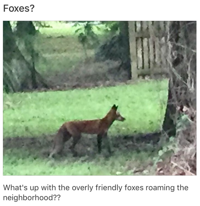 Here's a screen grab of the post I saw come up in Nextdoor!