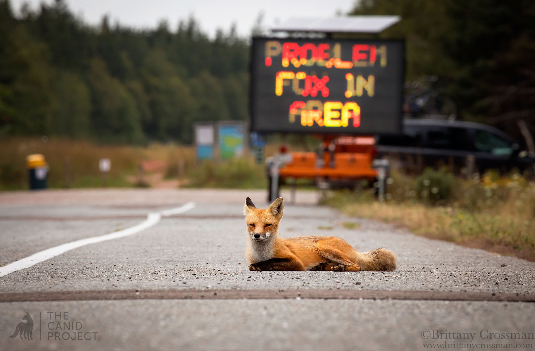 """PROBLEM FOX IN THE AREA"""