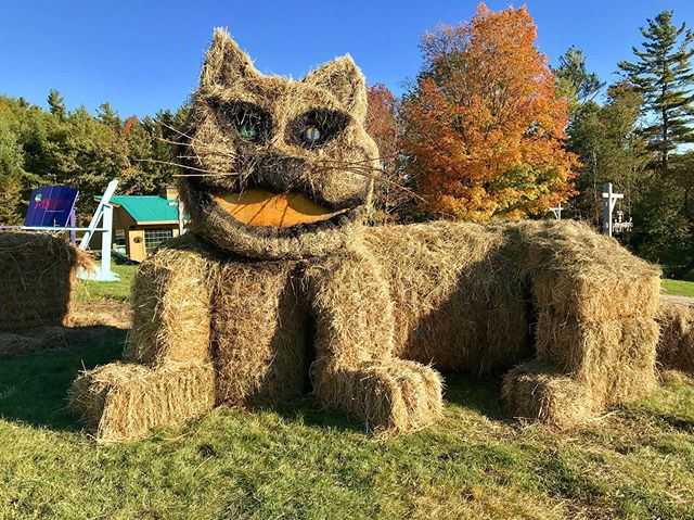 Who's ready for Tea Time? Come say hi to our very own Cheshire Cat 😸 • • • #fall #cat #cheshirecat #changingseasons  #vermont #killington #beast365!