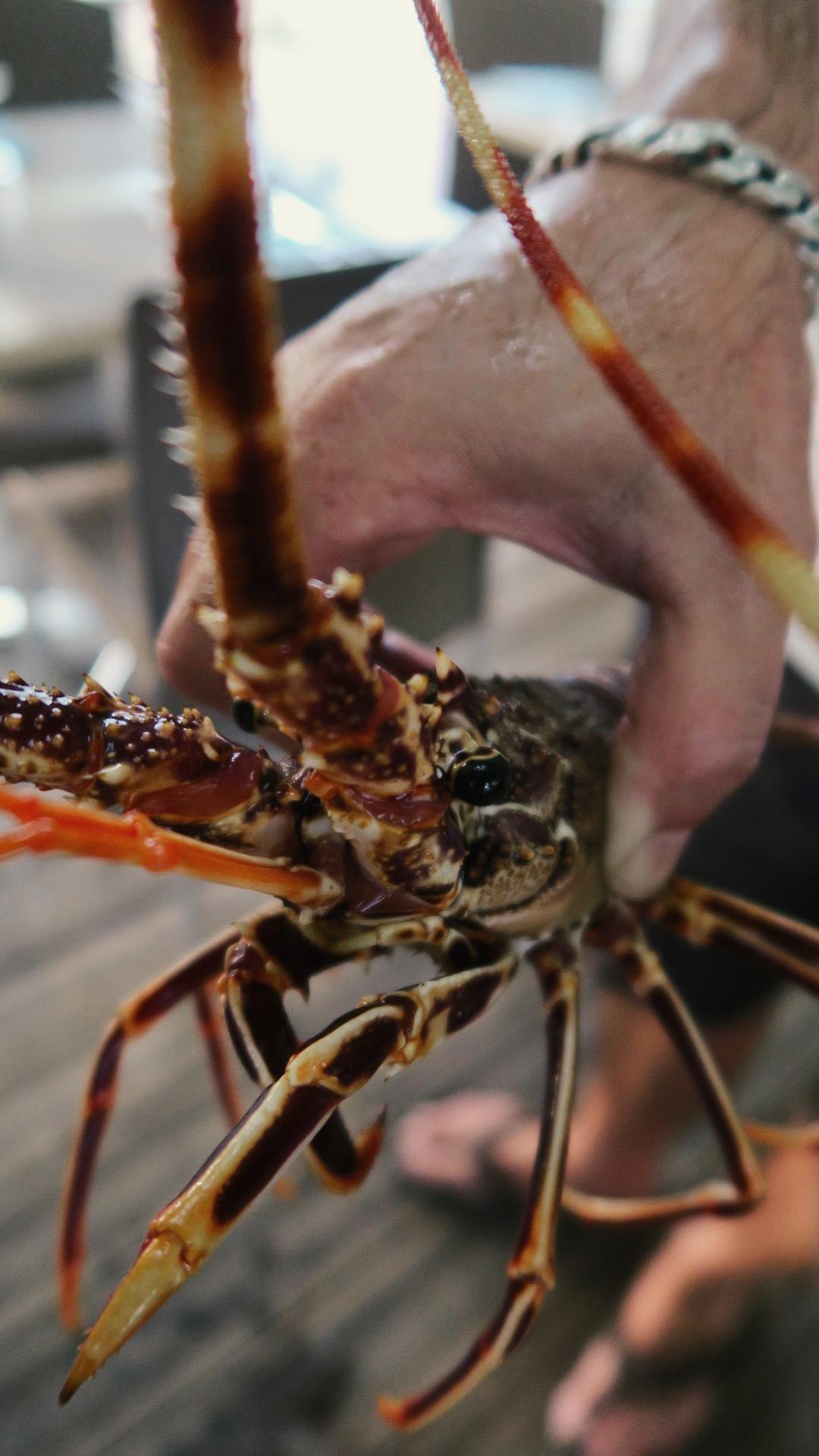 travellur_corsica_family_sea_lobsters.jpg