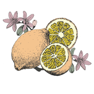 FAQ - most romantic italy - lemon - colour.png