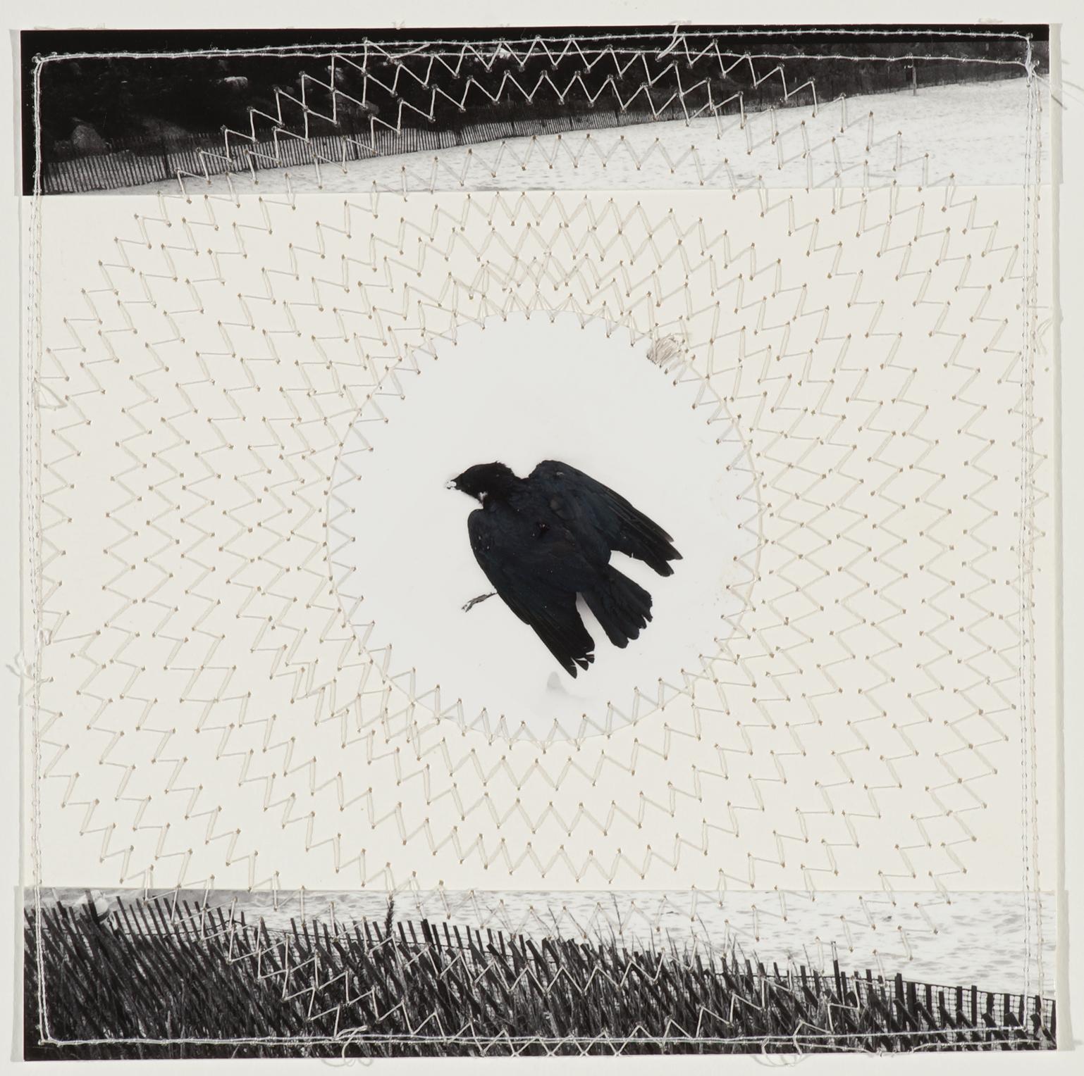 "Crow, 2014, 9""x9"", Archival digital print, silk thread"