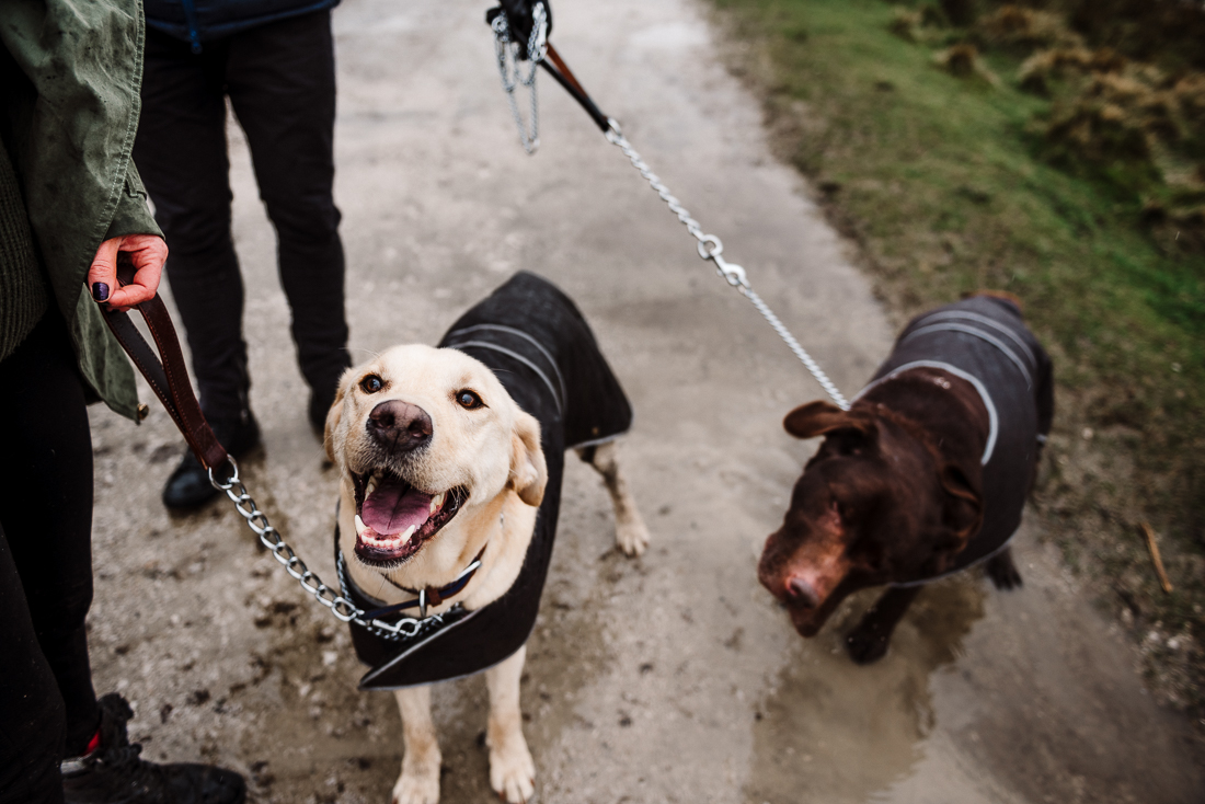 Documentary shot of dogs ready to go on a walk