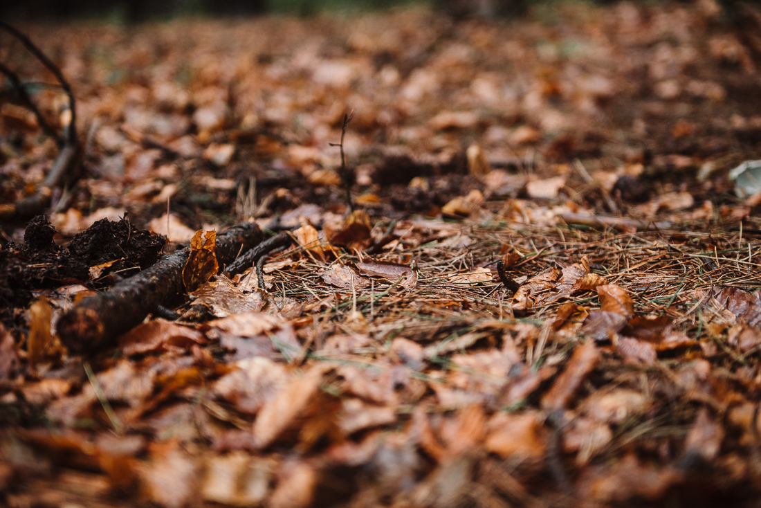 Detailed shot of the woodland floor.