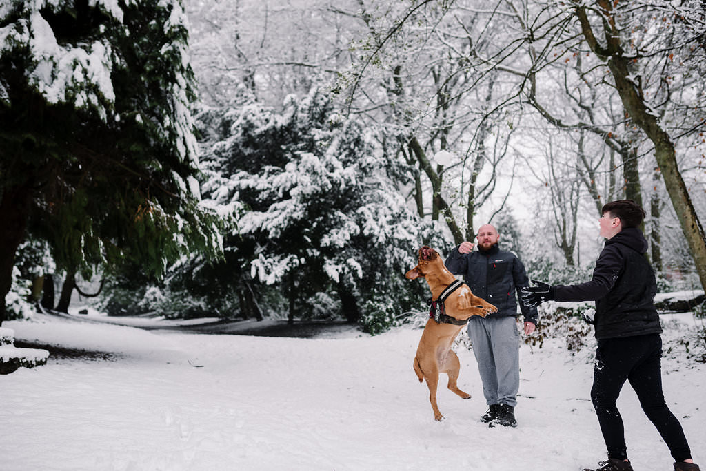 Fun photo of family playing catch with their dog in the park