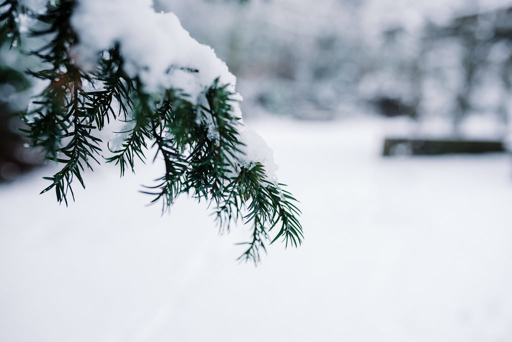 Detailed shot of snow on tree branch