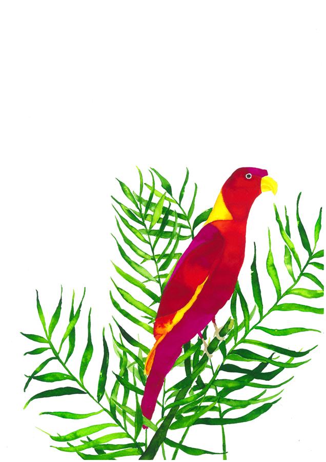 nadine-walker-illustration-bird-parrot.jpg