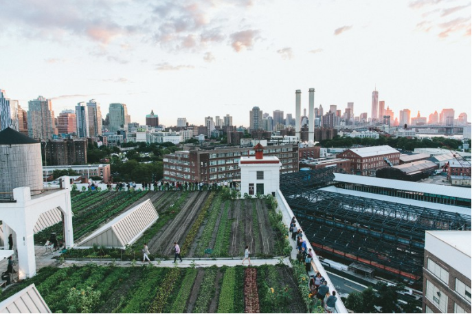 Brooklyn Rooftop Farm Available to book on Splacer