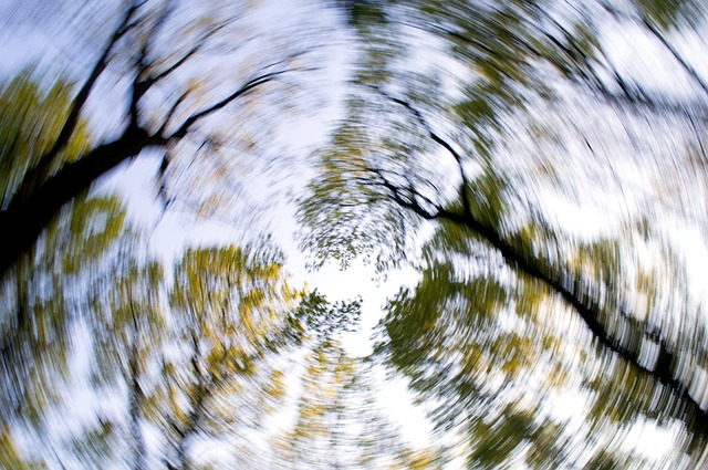 forest-1366345_640.jpg