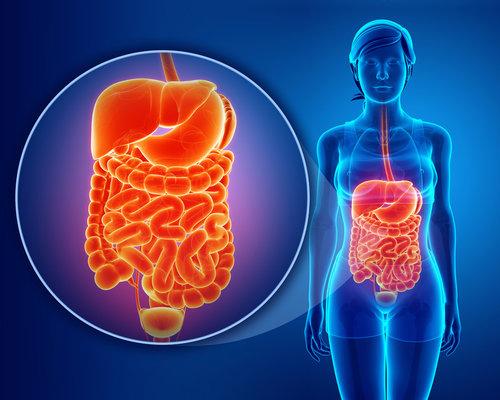 Digestive Health - Constipation | Diarrhea | Diverticulosis | GERD Hiatal Hernia | IBS | Sensitive Stomach | Ulcers